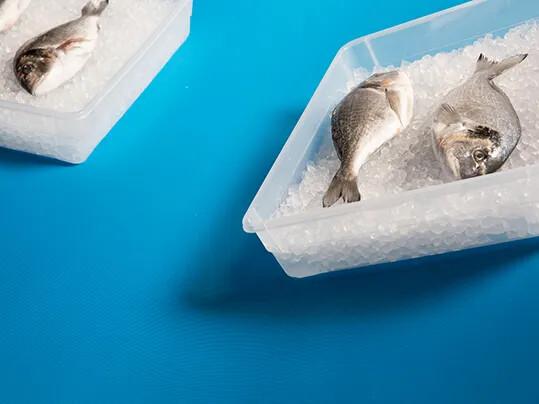 news-18-05-fish