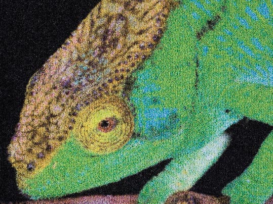 Coral_logo_printed_mat_chameleon