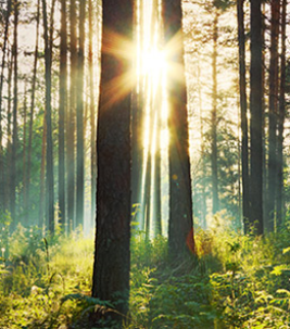 CBE trees environment