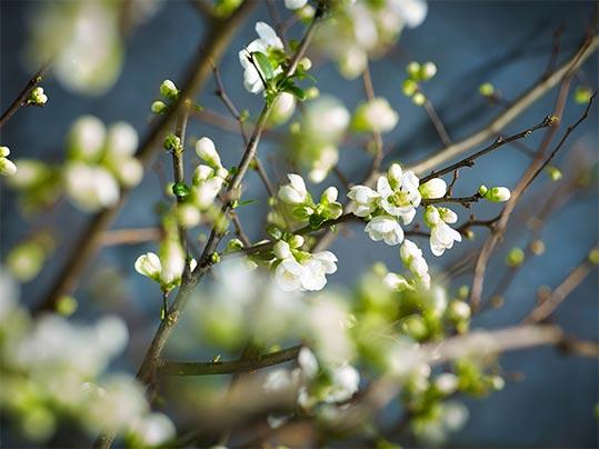 Blommor på gren
