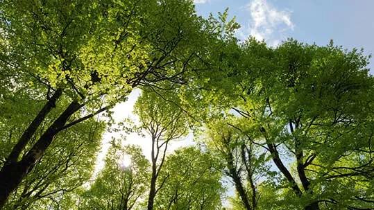 Nachhaltigkeitsbericht Teaser