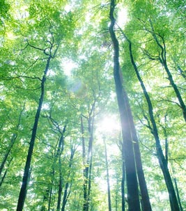 Sun shining through the forest - social responsibility on the part of Forbo.