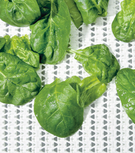 Food: Forbo Siegling Prolink plastic modular belt with fresh spinach.