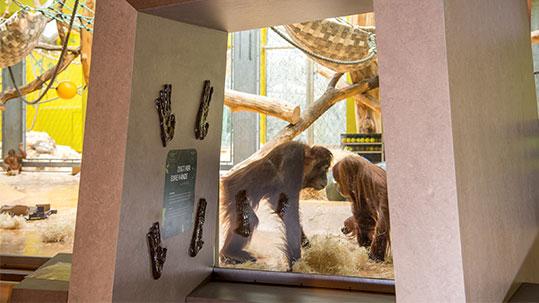 Tierpark-Hellabrunn-Orang-Utan