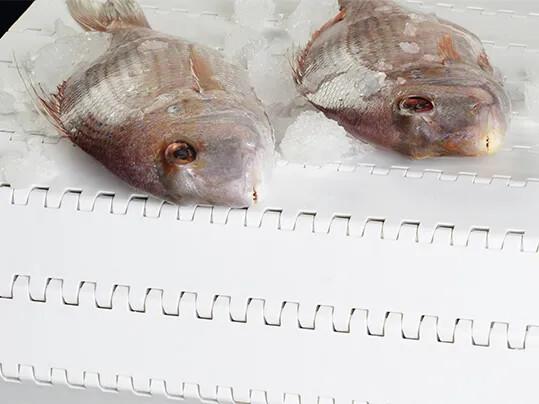 0348H PL S6 Fish
