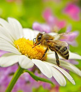 Bienen, Copyright: Patrizia Tilly
