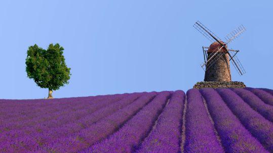 Forbo_Lebensräume_Provence