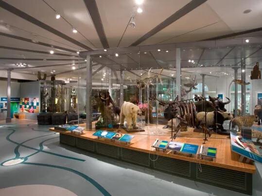 Marmoleum Leeds City Museum wykładziny podłogowe w placówkach wypoczynkowych