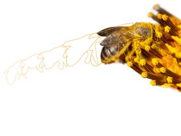 Бионические технологии в напольных покрытиях - Пчела