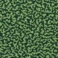 WF152134 cut grass