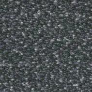 WF152158 fossil stone