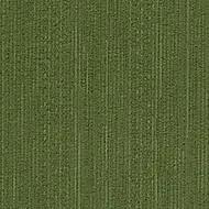 1504 kiwi