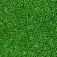 000369 grass