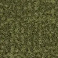 246021 moss
