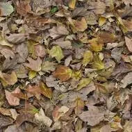 000509 autumn leaves - green
