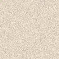 434513 seashell