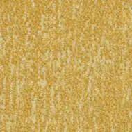 s445030 Canyon sulphur