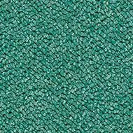 3616 eucalyptus
