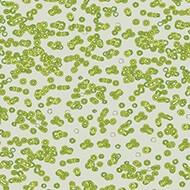 990203 Bacteria